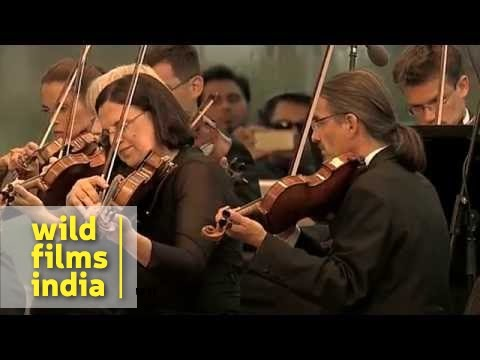 Beethoven's Fifth Symphony : 3rd and 4th movements