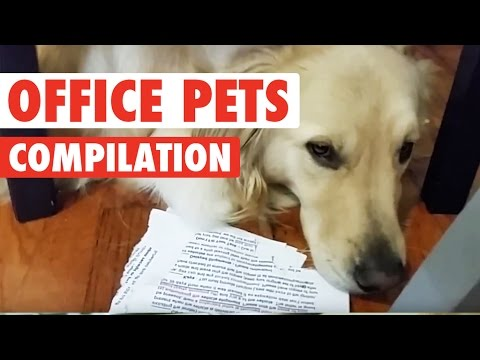 Office Pets || Funny Pet Compilation