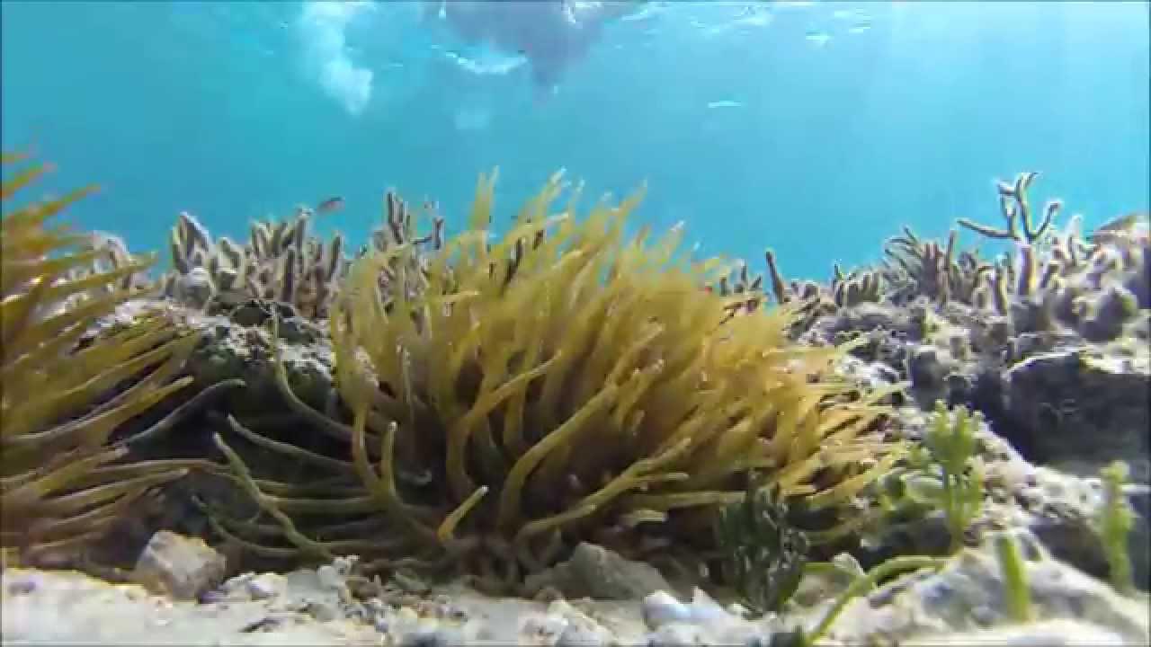 Snorkeling Junkanoo Beach Nau Bahamas 2017 You