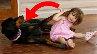 Hund schleudert Kind durch den Garten - Als es die Mutter sah, konnte sie ihren Augen nicht glauben!