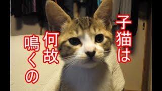 子猫が鳴く理由とは?ーかわいい子猫の秘密13 thumbnail