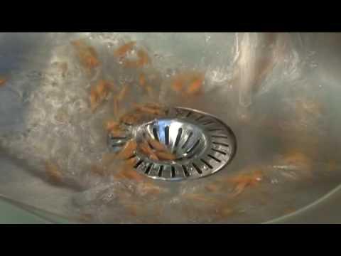 Stainless steel sink sieve
