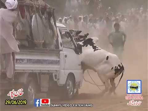 Bul Race In Pakistan Sunny Video Fateh Jang 29 06 2019