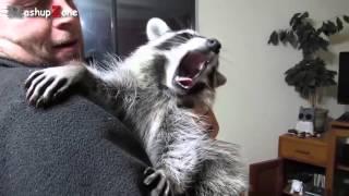 Животные любят ласку  Милые и симпатичные животные online video cutter com