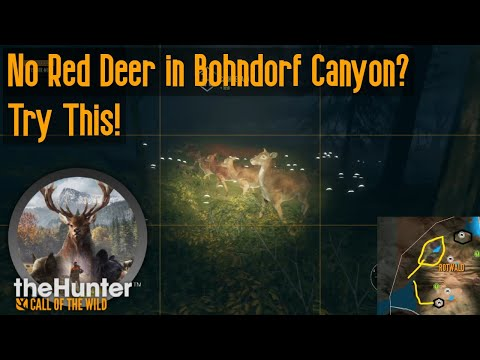 No Red Deer in Bohndorf Canyon? Try This! theHunter Call of the Wild |