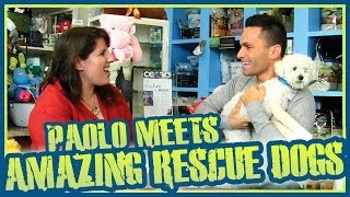 Meet Some Amazing Rescue Dogs & Know How You Can Help Them!