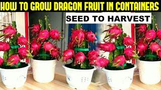 How To Grow Drągon Fruit | FULL INFORMATION