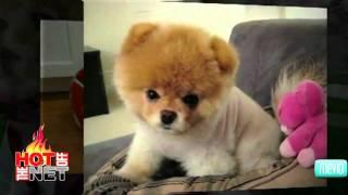 Cutest Dog Videos On Youtube