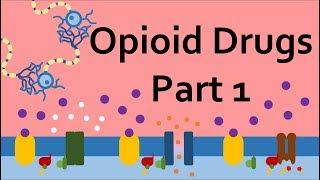 Opioid Drugs, Part 1: Mechanism of Action