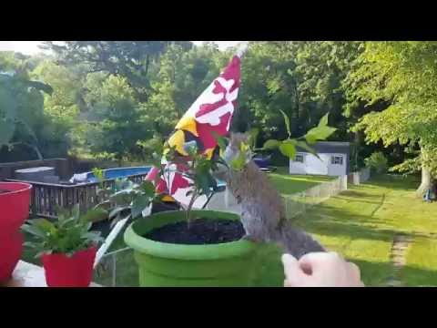 Wally the Squirrel: Playing outside!