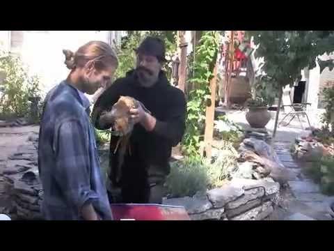 Dog Training East Bay Area