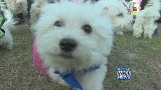 Furry friends turn out for Woof Woof 5K