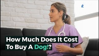 How Much Does It Cost To Buy A Dog? 2019 UPDATED