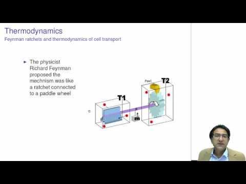 CHEM1001 - Thermodynamics - Cell transport and Feynman Ratchets