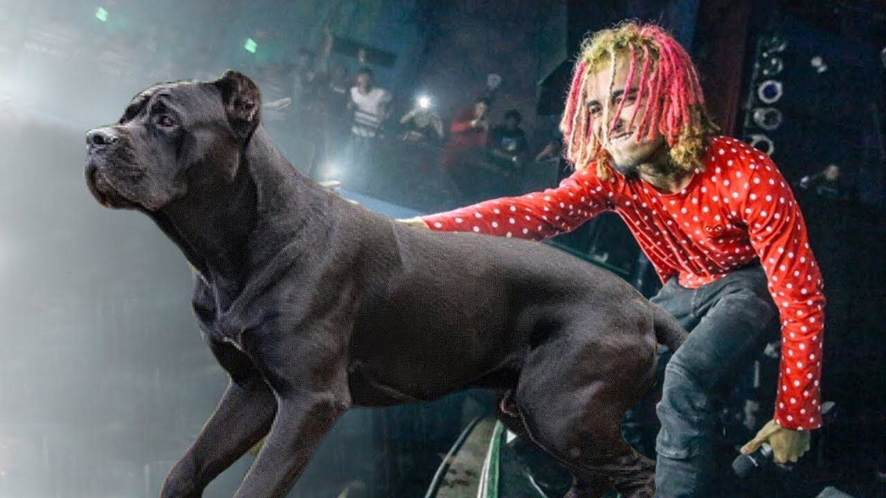 10 Dogs Most Liked by Rappers & Gangsters