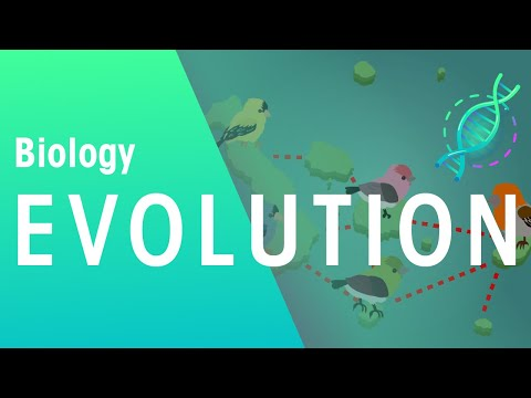 Evolution By Natural Selection - Darwin's Finches | Evolution | Biology | FuseSchool