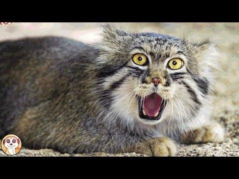 I Migliori Video Di Gatti Online Scegli Il Tuo Preferito Gattoblog