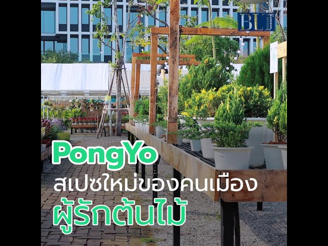 PongYo สเปซใหม่ของคนเมืองผู้รักต้นไม้