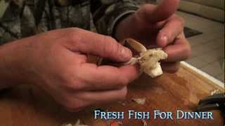 "Fresh Fish For dinner ""How to eat Blue Crabs"""