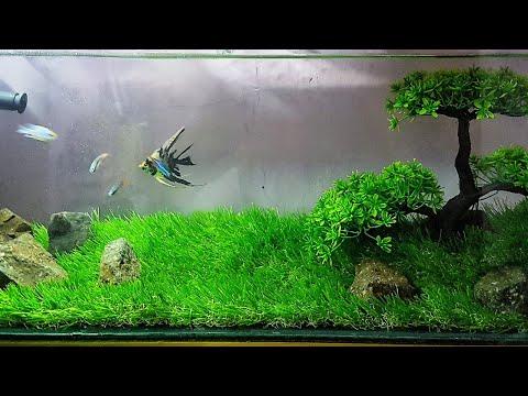 cara-membuat-aquascape-sintetis-terbaik-|-rumput-dan-pohon-sintetis-termurah