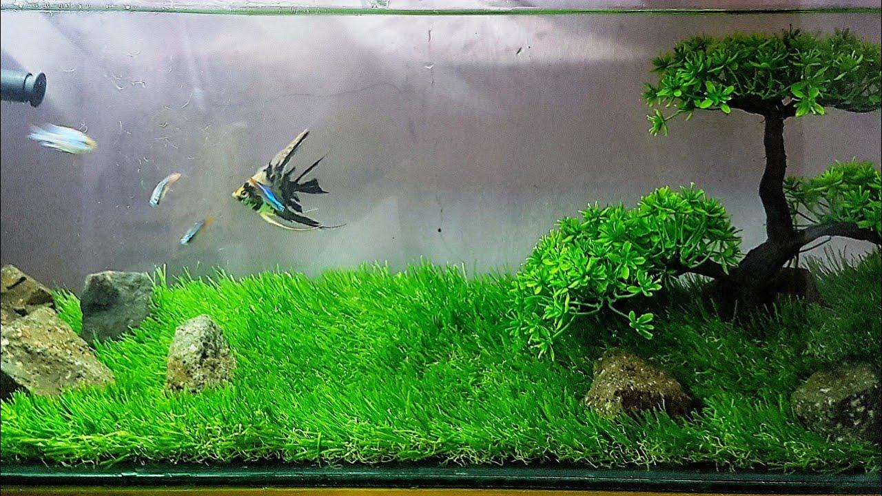 Cara Membuat Aquascape Sintetis Terbaik Rumput Dan Pohon Sintetis Termurah Youtube Rumput sintetis untuk aquarium