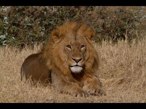 19-day Kenya and Tanzania African Wildlife Safari (2013)