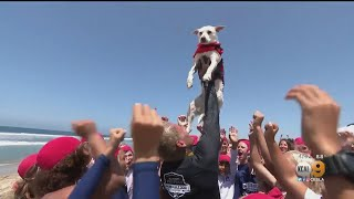 24th Annual Incredible Dog Challenge And Surf Competition In Huntington Beach