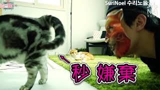 主子真的好難取悅啊!做什麼都要被嫌棄! 你說我這個貓奴還有什麼招數取能悅牠們o(〒﹏〒)o?
