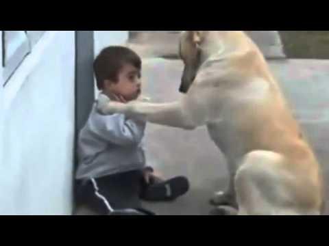 Down sendromlu çocuk ile köpeğin sevgisi.mp4