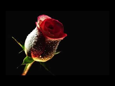 Un Trandafir Creste la Firida mea 2017