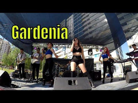 CUMBIA DE HOY - GARDENIA CUMBIA MIX