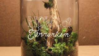Make a Terrarium w/ Local Materials (Native Terrarium) - How To Terrarium ep.3