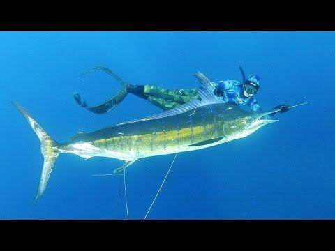 Pesca Submarina una enorme Marlin Negro con Tim McDonald - Historia completa (Engllish Audio)