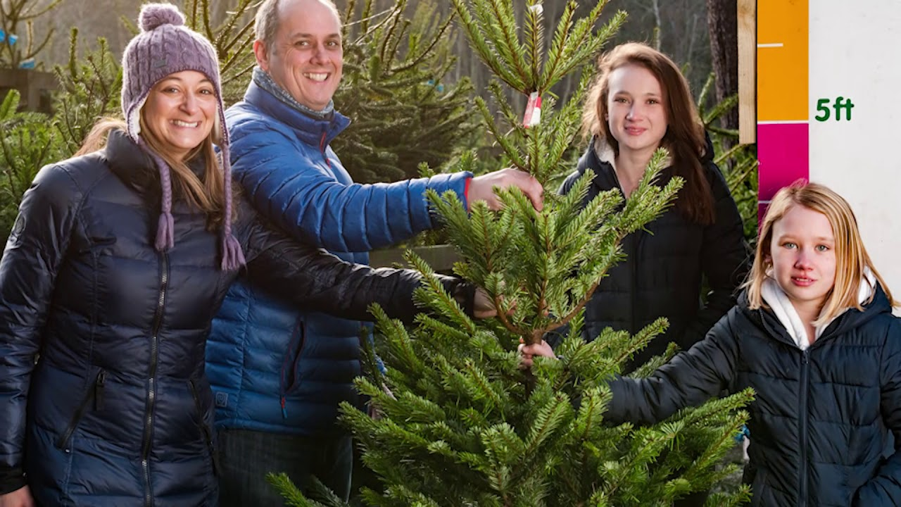 Christmas Trees from Forestry Commission Scotland - YouTube