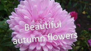#Осень. Прекрасные осенние #цветы.