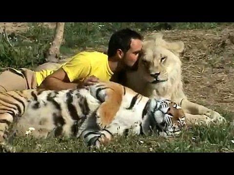 lion park south africa freundschaft zu raubtieren l we tiger youtube. Black Bedroom Furniture Sets. Home Design Ideas