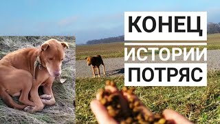 Последнее видео истощенного пса. СМОТРЕТЬ ДО КОНЦА