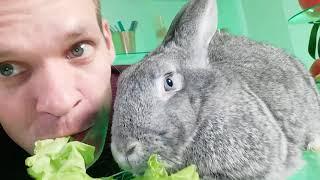 Кролик на съемках)