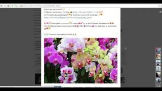 видео цветы череповец