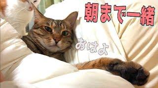 2度寝がしたくなる朝 猫たちが寝てもいいんだよと囁きかけて来ます ・T...