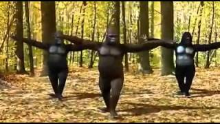 Video Gorilla Dance In Tamil Song download MP3, 3GP, MP4, WEBM, AVI, FLV Juni 2018