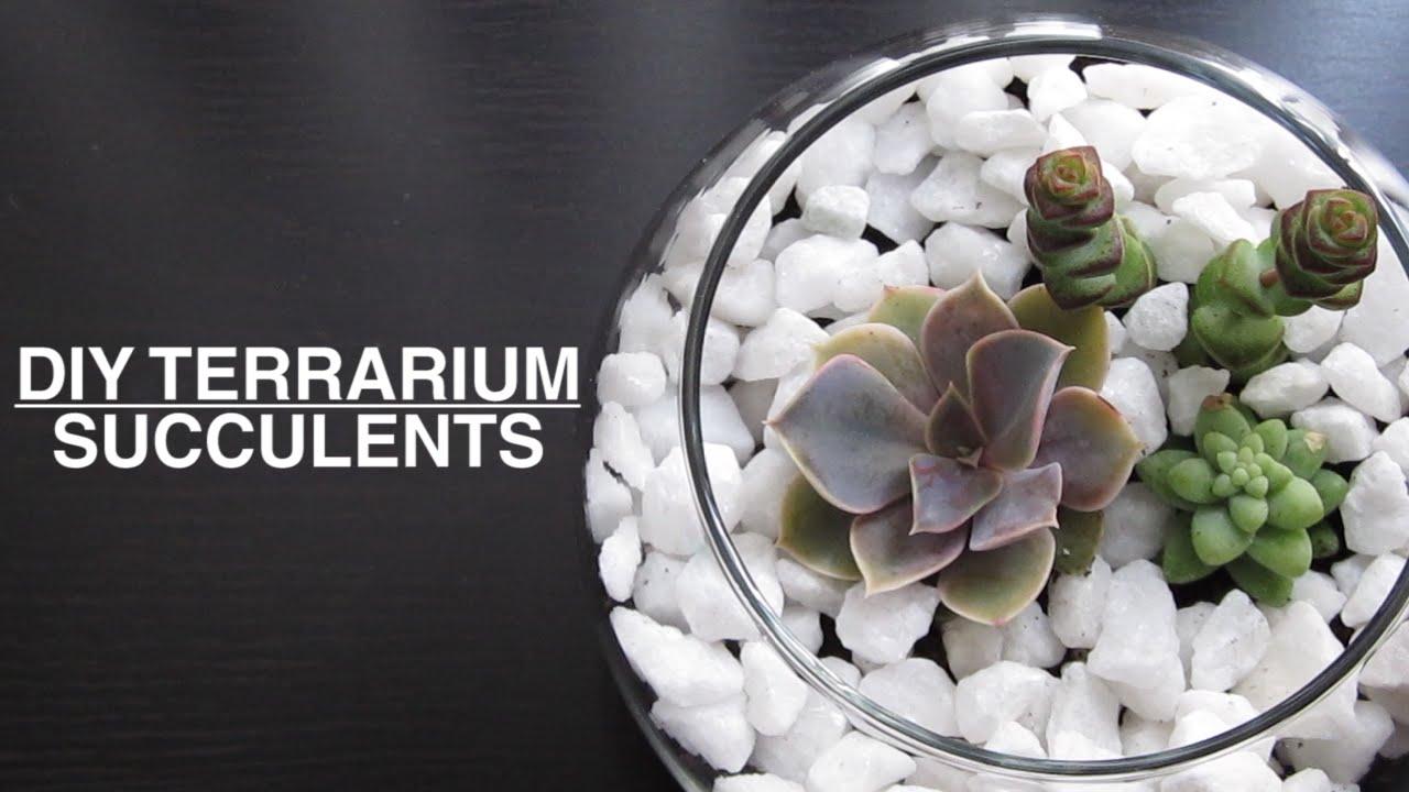 Diy Succulent Plant Terrarium Youtube