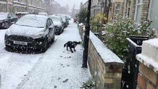 「何じゃこの白いやつ!よし、愛してやろう」初めての雪に大興奮な犬
