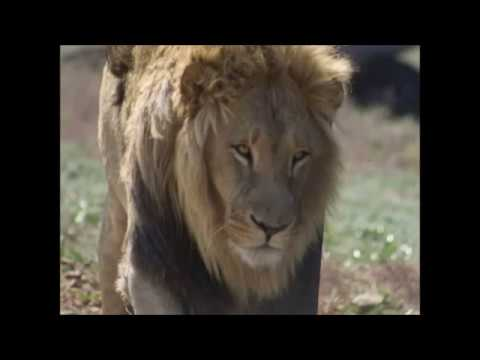 Südafrika Rundreise Vom Krüger Nationalpark zum Cap