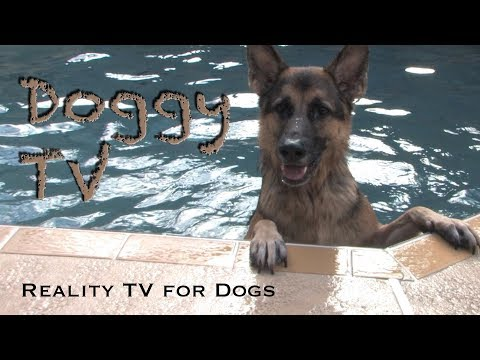 Dog TV 1 - (Reality TV for Dogs)