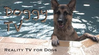 Dog TV 1  (Reality TV for Dogs)  Please Subscribe