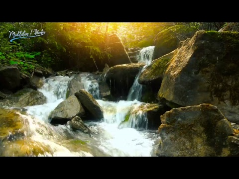 Nature Sounds - Live 24/7 | Tropical Rainforest with Summer Stream | Water Sound Nature Meditation