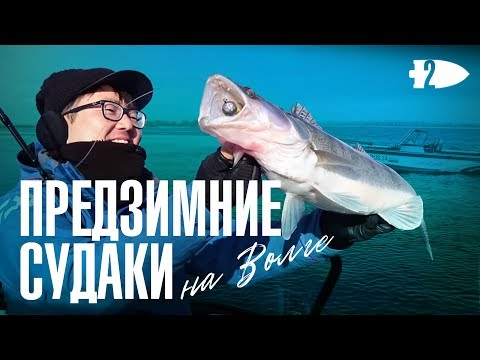 Предзимние судаки на Волге. Канал Андрея Старкова.