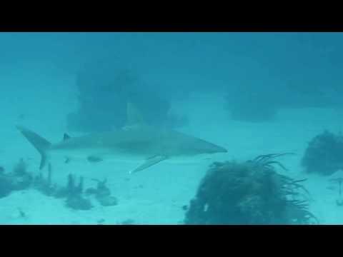 JJ Divers St Thomas Scuba Diving Shark Feeding