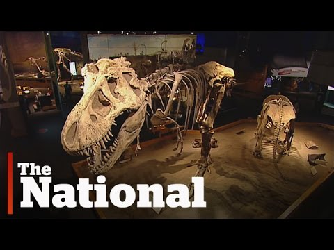 Dinosaur Museum Sneak Peek